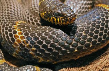 Селфи с гремучей змеей стоило американцу руки