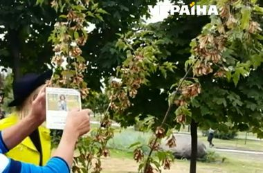 На аллее памяти Кузьмы Скрябина появились новые деревья