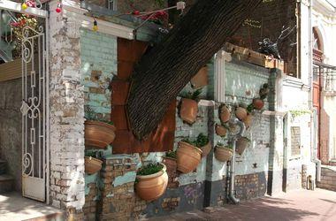 Интересные места Киева: Дерево, растущее в заборе