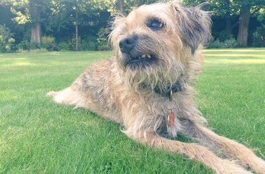 От имени собаки британского теннисиста Энди Маррея будет издана книга