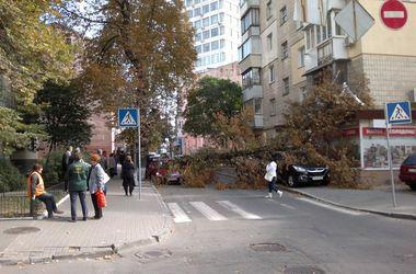 В центре Киева огромное дерево рухнуло на машины