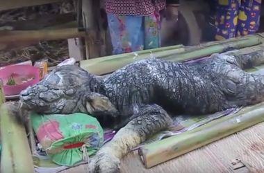 В Таиланде буйволица родила странное существо