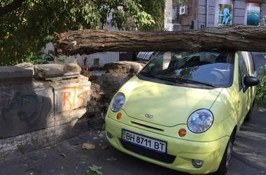 В центре Одессы огромное дерево рухнуло на две машины