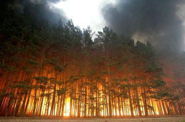Синоптики предупредили о чрезвычайной пожарной опасности в Украине