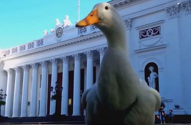 Кандидат с яйцами: в Одессе утка готова сразиться за кресло мэра