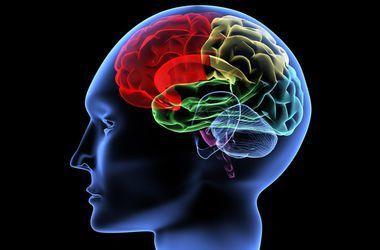 Во Франции мужчина практически без мозга жил 40 лет
