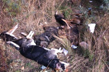 В Киеве - массовое убийство собак