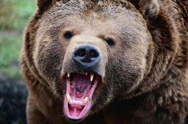 В России медведь и охотник убили друг друга