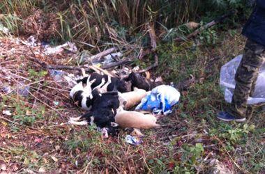 Милиция начала расследовать массовое убийство собак в Киеве