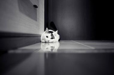 Ученые доказали способность кошек распознавать выражение лица хозяина