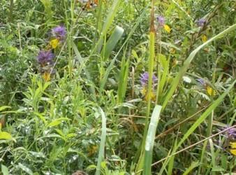 какие травы очищают от паразитов