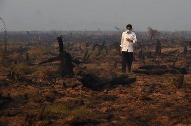 Пожары в Индонезии потушат только в январе