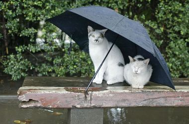 Синоптики обещают дожди и потепление в Украине