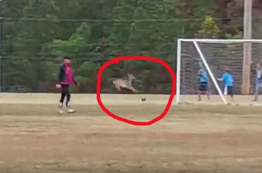 Олень забил гол во время тренировки детской футбольной команды