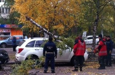 В Киеве ветер повалил березу на автомобиль