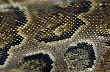 Досье на болезнь: псориаз — заболевание змеиной кожи - Возникает ...