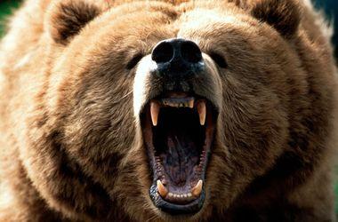 В России медведь напал на двух мальчиков