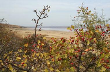 Судьба Куяльника: национальный природный парк  будет охранять закон