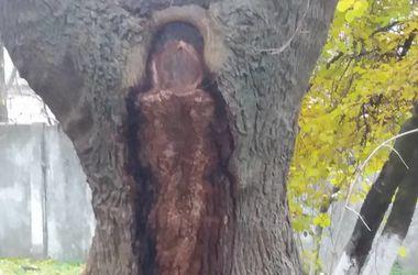 Под Киевом на дереве проявился образ Божьей Матери – местные жители