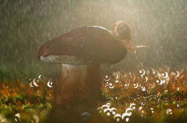 Ученые обнаружили, что грибы могут вызывать ливни