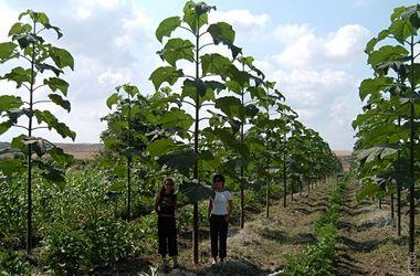 В Украине посадят первый быстрорастущий лес