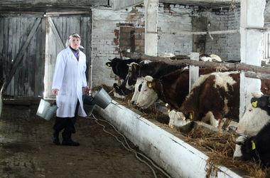 В Украине становится все меньше молока