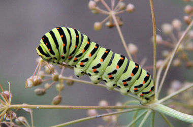 Ученые рассказали, каким бы был мир без насекомых
