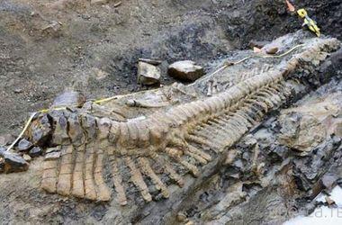 Найден новый вид динозавра с уникальным строением