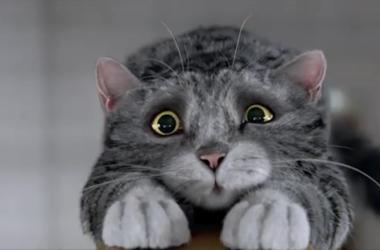 Ролик с рождественским котом взорвал Интернет