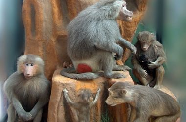 Прогулка по Харькову: скелет самки мамонта, коллекция обезьян и царский изумруд