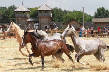 """В """"Парке Киевская Русь"""" покажут красивых породистых лошадей"""