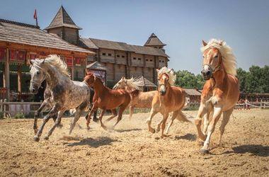 Главные события 20 — 22 ноября: выставка лошадей и детский бал от Олега Скрипки