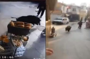 Дикий кабан терроризировал жителей Стамбула