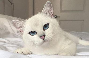 """Кот с """"мультяшными"""" глазами стал новой звездой сети"""
