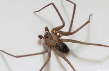 Соседи натравили полицию на мужчину, убивавшего паука