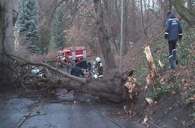 Во Львове ветер срывает кровли с домов и валит деревья: есть пострадавшие