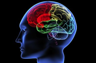 """В мозге каждого человека есть и """"мужская"""", и """"женская"""" часть - ученые"""
