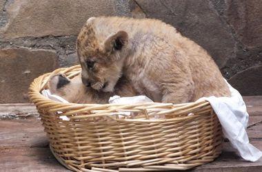 В зоопарке Крыма будут разводить костры для обогрева животных