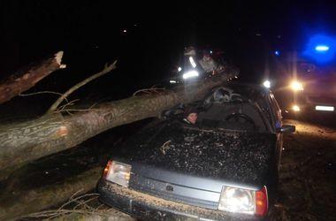Под Киевом на авто с людьми упало дерево