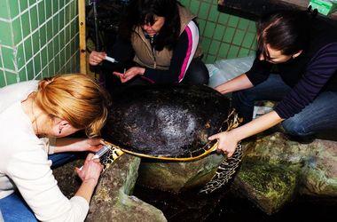 В зоопарке Киева умерла знаменитая черепаха