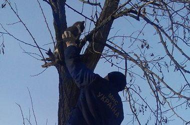Под Киевом пожарный спас кота