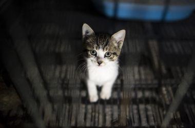 Ученые выяснили, почему кошки все опрокидывают