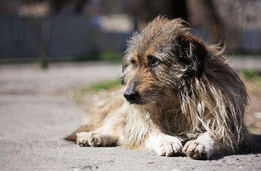В Полтаве бездомная собака спасла студентку, которую сбила машина