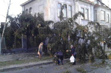 Во Львове упала новогодняя елка