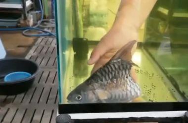 Сердобольный мужчина забрал домой половинку рыбы и она прожила у него полгода