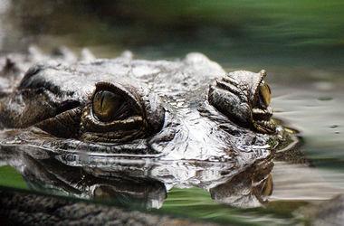 Из-за масштабных наводнений на севере Австралии могут появиться крокодилы