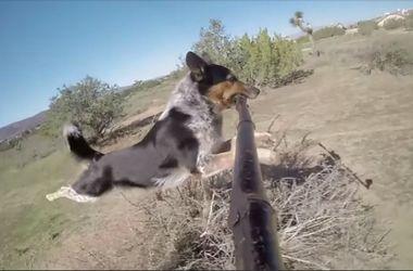 Собака с помощью селфи-палки засняла свою пробежку