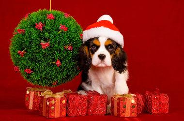 Собака и новогодние праздники: как помочь любимцу пережить стресс