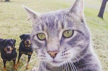 Селфи невозмутимого кота на фоне собак стало хитом интернета