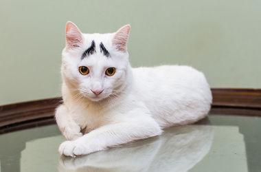Самые знаменитые кошки Instagram
